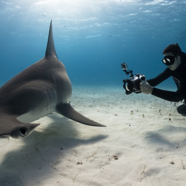 Freediving for a Cause: The Watermen Project and Shark Conservation