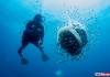 Deepblu Diver Spotlight: Nicole Helgason