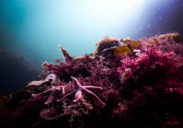 Report On the Front Lines: The Green Fins' Approach to Coral Reef Protection