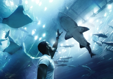 Changing Perspectives, Saving Sharks: Shark Guardian