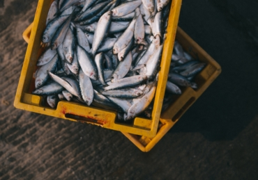 Plenty More Fish in the Sea? Sustainable Seafood and Where to Find It
