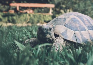 The Odd World of the Black Market Turtle Trade
