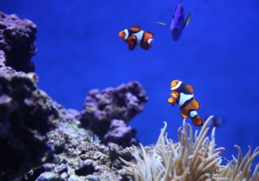 A Little Help from a Friend: 5 Symbiotic Marine Animal Relationships