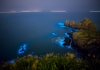In Search of Light: Bioluminescent Organisms