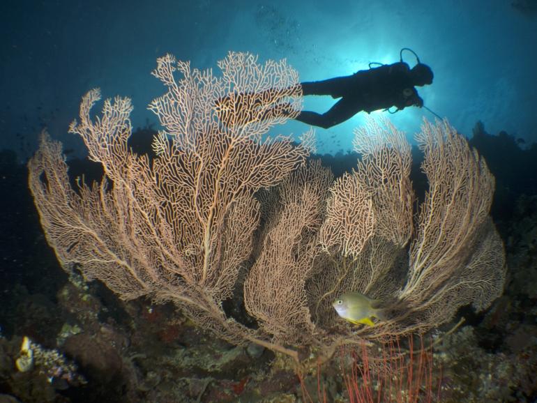 Deepblu Diver Spotlight: James Mamoto