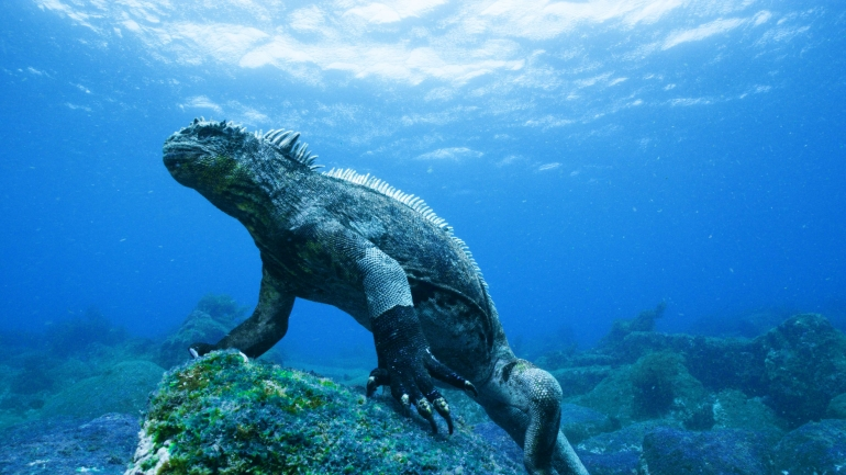 Diving with Darwin: The Galapagos Islands