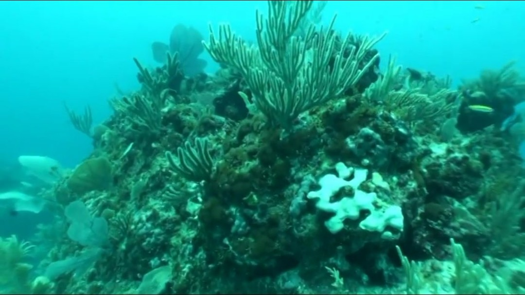 diving-in-punta-cana