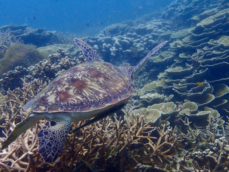 Tioman: Small Island, Big Adventure