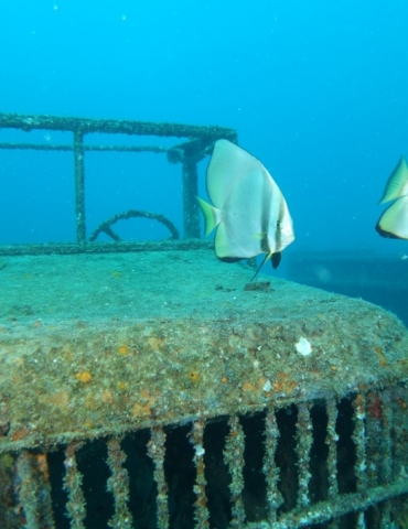 Ten Great Dives in Southeast Asia: The Videos!