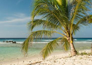 Reefs, Wrecks, and Spearfishing in Beautiful Barbados