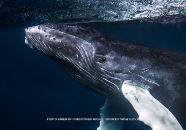 Big Thrills Right on your Doorstep: Diving and Humpbacks in the TCI