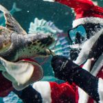 Santa Claus scuba diving in an aquarium feeding a sea turtle with a snowy background.