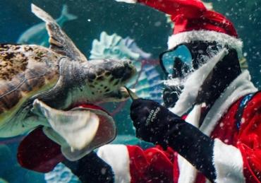 Christmas Comes to the Aquarium