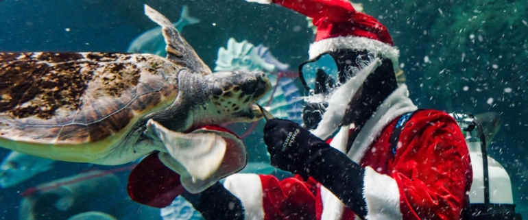 Christmas Comes to the Aquarium