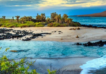 Scuba Diving Galapagos, is it a dream trip?!