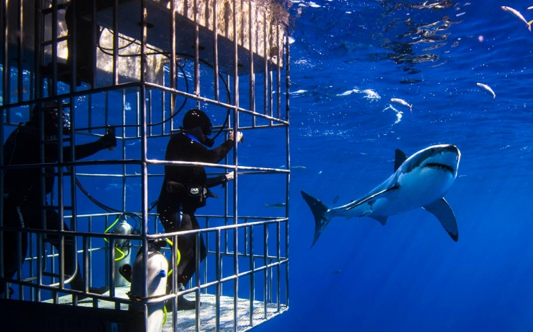 Great White Shark Cage Diving | Worth it?
