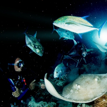 Beginner's Guide to Night Diving
