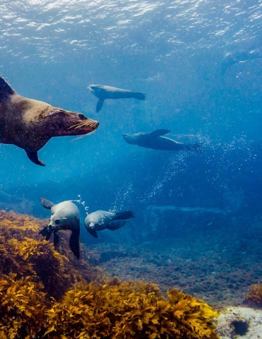 Diving with Schools of Sea Life – Top 5 Dive Spot Recommendations