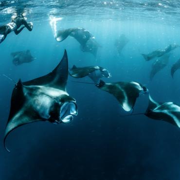 4 Vacation Destinations For Your Scuba Diving Bucket List