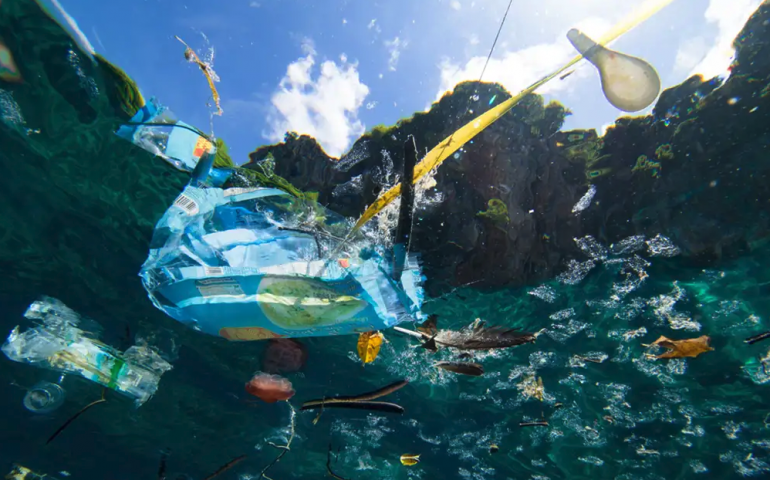 Scuba Divers Taking Action for a Healthy Ocean
