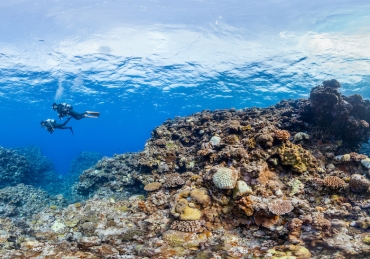 Everything You Need to Know about Diving the Great Barrier Reef