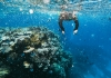 Snorkeling on the Great Barrier Reef: Diving Among Global Treasures