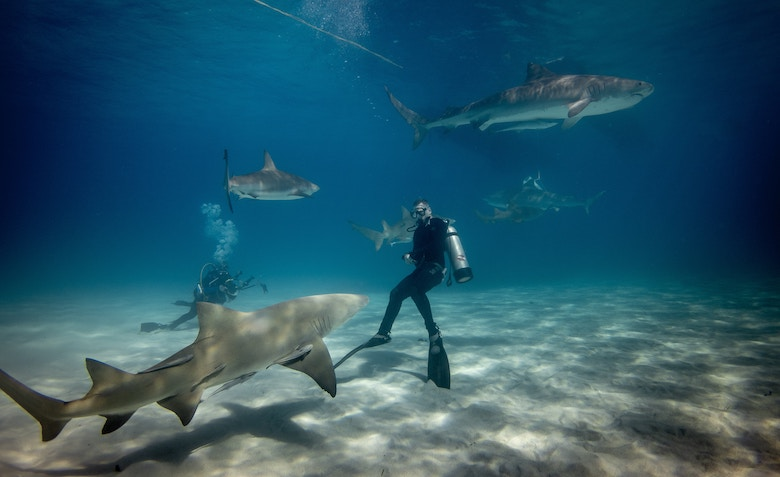 Comparing Shark Tours in Australia: The Best of the Best in the World