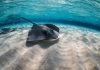 The Truth about Stingrays