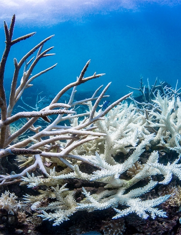 Bleaching of Coral: The Death of a Wonder