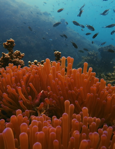 5 Ways YOU Can Help the Reefs