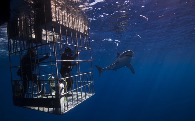 Diving with the Great White Sharks is Not For Everyone: But is it for you?