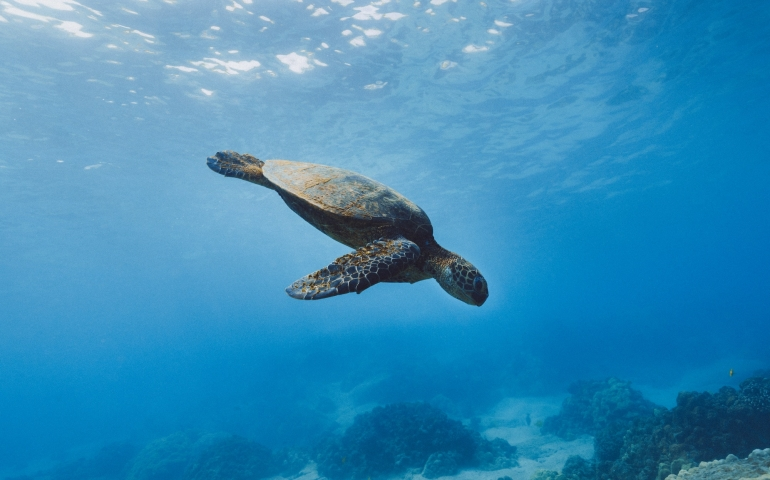 How Climate Change is Affecting Marine Life