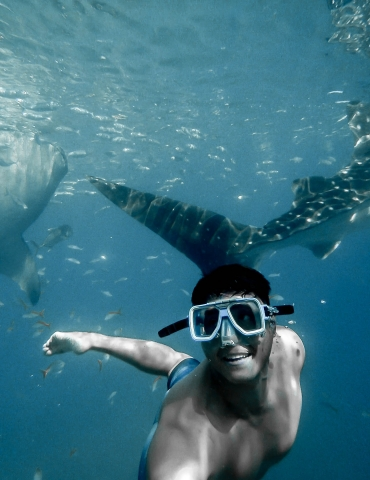 The Ultimate Guide to Snorkeling with Whale Sharks