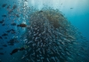 5 Must See Dive Sites at The Great Barrier Reef
