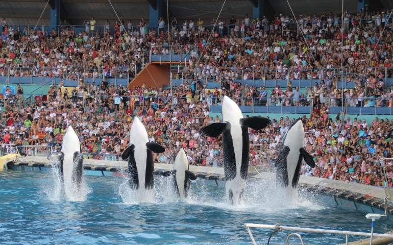 France Bans Captive Breeding of Whales and Dolphins