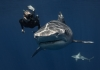 Deepblu Diver Spotlight: Ocean Ramsey