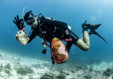 Ocean Conservation for Newbies