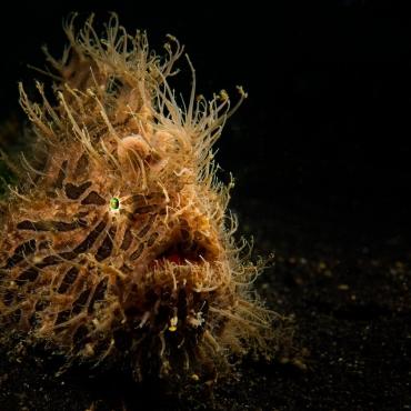 10 Weird Marine Creatures You Can Spot above 40m!