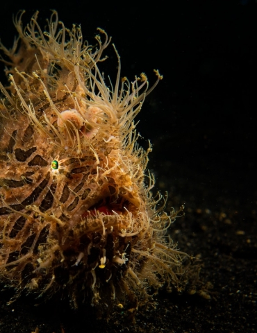 10 Weird Marine Creatures You Can Spot above 40m!