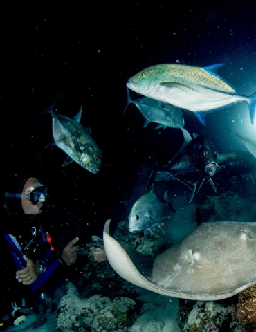 A Newbie's Guide to Night Diving