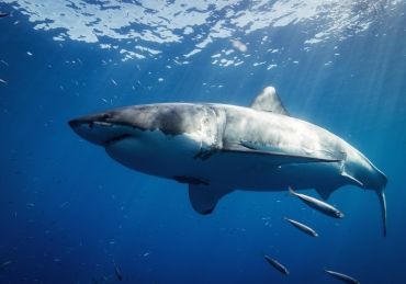10 Amazing Sharks From Around The World