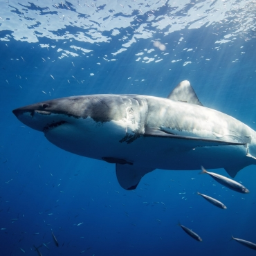 10 Amazing Sharks From Around The World