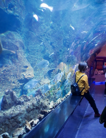 7 ways to see under the sea without getting wet