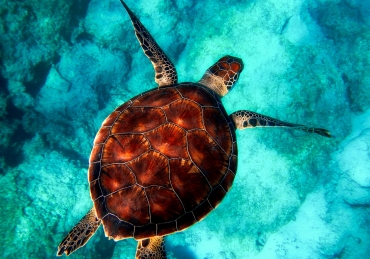 10 Best Places for Scuba Diving to Discover this Year
